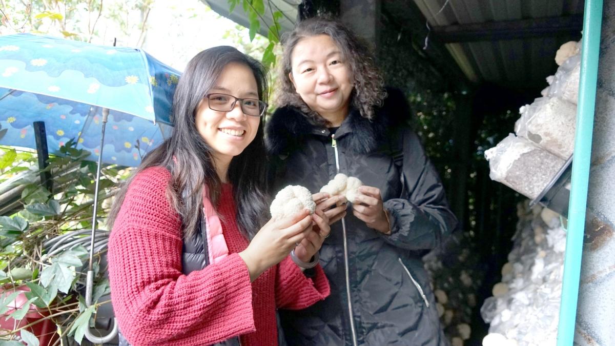 宜蘭尚青猴頭菇 年節送禮蓋高尚